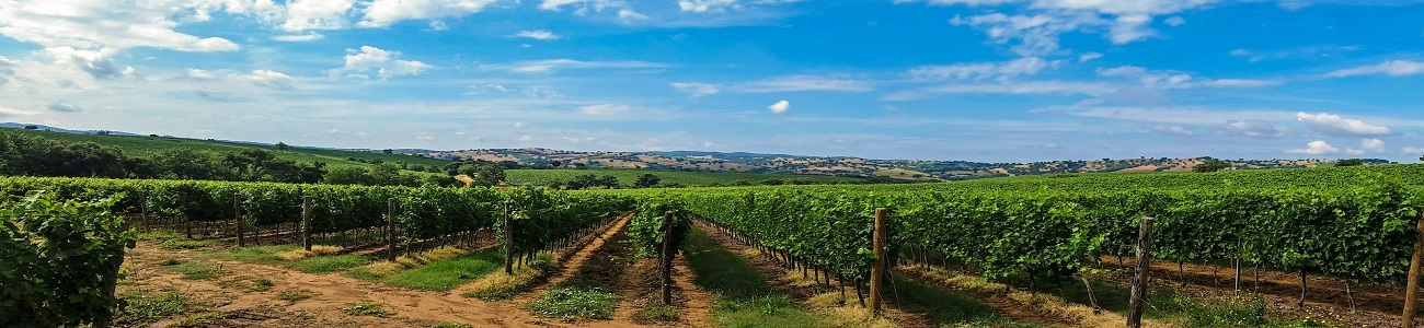 Montalcino produces quality wines, even the Etruscans knew the position was ideal; a sun exposure which ripens the grapes perfectly to produce a wine, aged in casks, of a superior flavour, fragrance, and appearance.